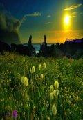 """Обложка книги """"Dandelion Sunrise"""""""