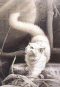 """Обложка книги """"Снежные кошки"""""""