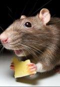 """Обложка книги """"Мышиный кризис"""""""