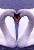 """Обложка книги """"Верная любовь"""""""