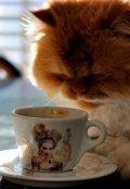 """Обложка книги """"Одно волшебное утро."""""""