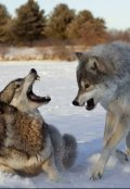 """Обложка книги """"Схватка с волками"""""""