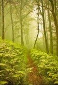 """Обкладинка книги """"Хочу в ліс"""""""