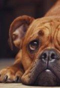 """Обложка книги """"Собачье счастье 2"""""""