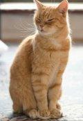 """Обложка книги """" Урок 1. Правила поведения в школе котов."""""""