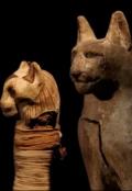 """Обложка книги """"В Египте найдено 70 миллионов мумий животных"""""""