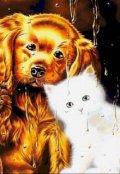 """Обложка книги """"Дождь, вечер, коты и собаки"""""""