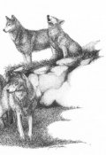 """Обложка книги """"Волки не плачут"""""""