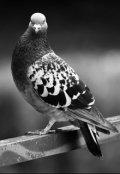 """Обложка книги """"Открытие дня: голубей можно пинать!"""""""
