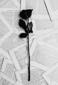 """Cubierta del libro """"Mil Palabras Un Millón De Pensamientos..."""""""