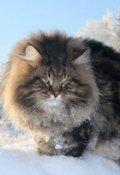"""Обложка книги """"История самого свободолюбивого кота ."""""""