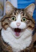 """Обложка книги """"Житьё кошачье. Быль 1. Понаехали"""""""