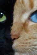 """Обкладинка книги """"Котячі очі"""""""