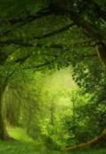 """Cubierta del libro """"El bosque del olvido."""""""