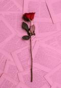 """Cubierta del libro """"Escritos tontos de una adolescente..."""""""