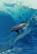"""Обложка книги """"""""Крик  дельфина"""".(баллада  о  потерянной  любви)"""""""