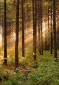 """Обкладинка книги """"Пригоди Йомі, або як лісна фея стала людиною. """""""