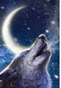 """Обложка книги """"Кабаре """"Одинокий волк"""""""""""