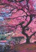 """Обложка книги """"Розовый лес"""""""