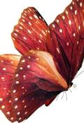 """Обложка книги """"Сказка про бабочек"""""""