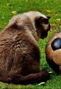 """Обложка книги """"Мышиный футбол"""""""