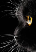 """Обложка книги """"Проклятие чёрного кота"""""""