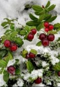 """Обложка книги """"Сказка о Морозко,ягоде клюкве и любви"""""""