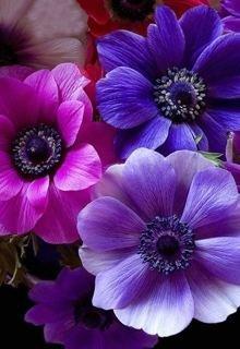 """Книга. """"Фиолетовые цветы"""" читать онлайн"""