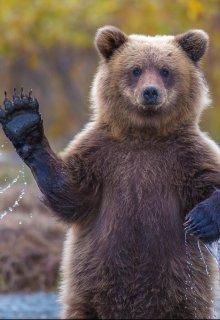 """Книга. """"Война -- искусство медведя"""" читать онлайн"""