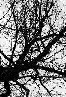 """Книга. """"Стихотворение """"Дерево"""""""" читать онлайн"""
