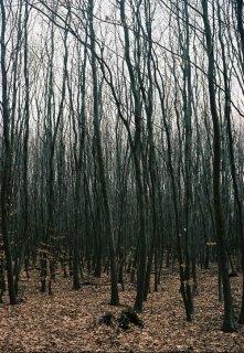 """Книга. """"Темный-темный лес"""" читать онлайн"""