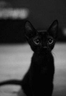"""Книга. """"Черный кот"""" читать онлайн"""