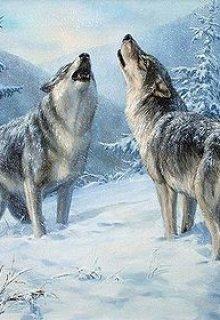 """Книга. """"Волчья любовь"""" читать онлайн"""