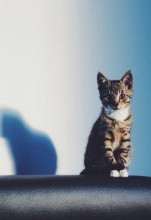 """Книга. """"Когда я стала кошкой"""" читать онлайн"""