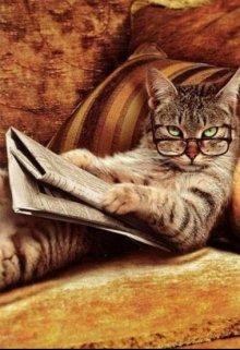 """Книга. """"Как сложно жить на свете без котов"""" читать онлайн"""