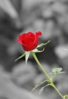 "Книга. ""Роза пахнет розой"" читать онлайн"