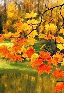 """Книга. """"Танец осенних листьев"""" читать онлайн"""