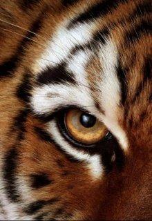 """Книга. """"Учитель и тигры"""" читать онлайн"""