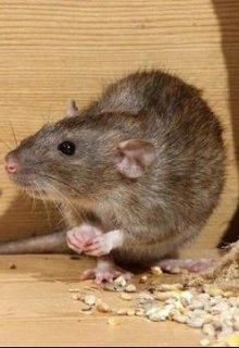"""Книга. """"Урок 3. Про мышь и крупу. """" читать онлайн"""