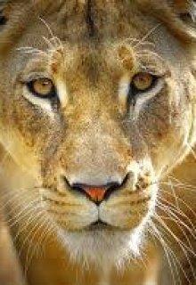 """Libro. """"un lobo entre leones"""" Leer online"""