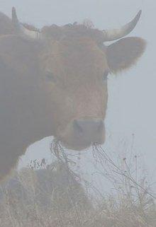 "Книга. ""Коровы ели туман"" читать онлайн"