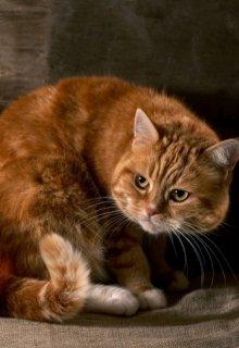 """Книга. """"Едят ли коты сухари? Не любят, но иногда едят!"""" читать онлайн"""