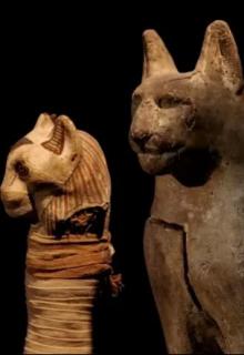 """Книга. """"В Египте найдено 70 миллионов мумий животных"""" читать онлайн"""