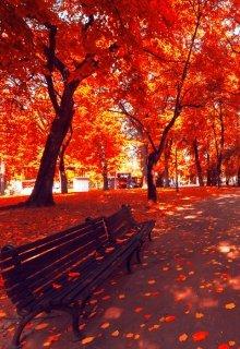 """Книга. """"Я мечтаю полюбить осень"""" читать онлайн"""