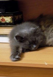"""Книга. """"Кот моей мечты"""" читать онлайн"""