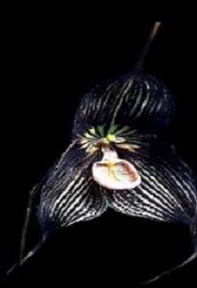 """Книга. """"Принцесса орхидея"""" читать онлайн"""