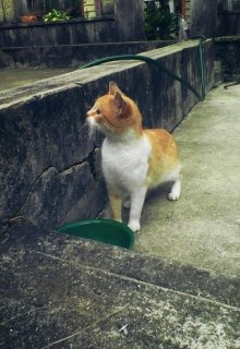 "Libro. ""Mí gata dorada"" Leer online"