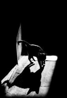 """Книга. """"Черная кошка"""" читать онлайн"""