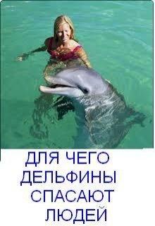 """Книга. """"Для чего дельфины спасают людей"""" читать онлайн"""