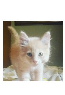 """Book. """"Lost Kitten"""" read online"""